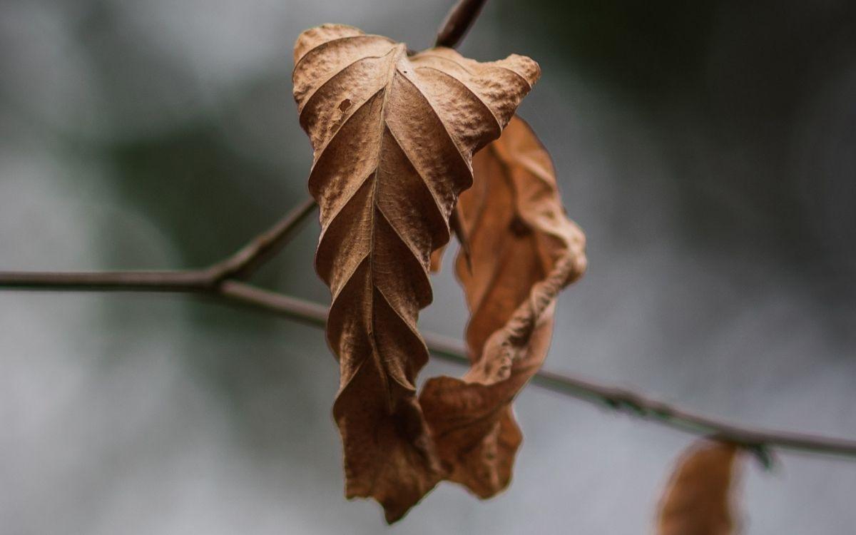 OMG Magazine - inspiratie - gedicht over de herfst - het laatste blad - gedicht poezie over vasthouden loslaten